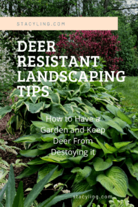 7 Ways to Keep Deer From Eating Your Plants