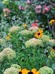 Preparing the Flower Garden For Fall Plantings