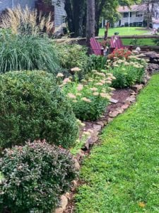 Best Plants for the Fall Garden