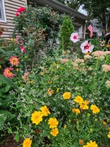 Best Plants for the Fall Border