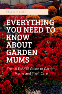 Everything You Need to Know About Garden Mums