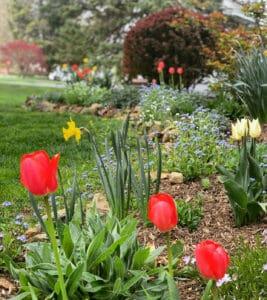 Spring Garden Flowers Tour