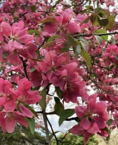 Spring Flower Garden Tour