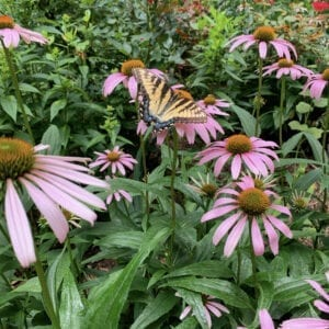 Flowers that Butterflies Love