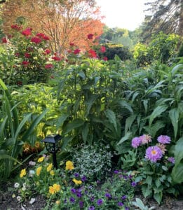 Colorful Cottage Garden