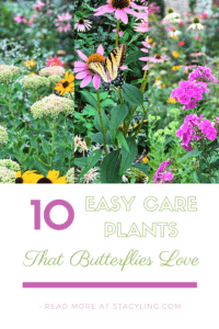 10 Easy Care Plants that Butterflies Love