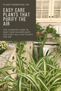 Easy Care Plants that Purify the Air