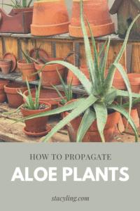 How to Propagate Aloe Plants