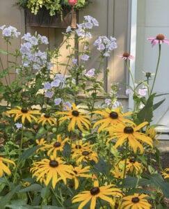 Summer Garden Flowers that Butterflies Love