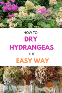How to Dry Hydrangeas the Easy Way