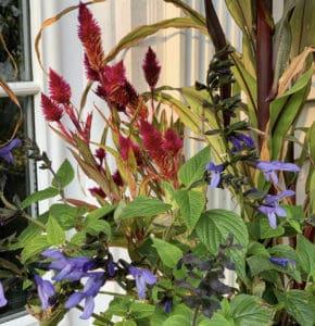 Container Garden for Fall