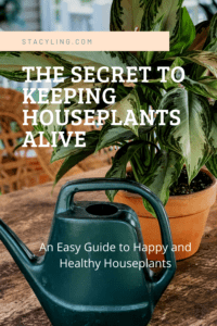 The Secret to Keeping Houseplants Alive