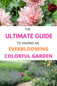 The ULTIMATE Guide to Having an Everblooming Colorful Garden
