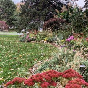 Sedum autumn joy is one of the best fall garden flowers