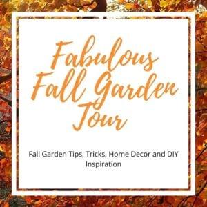 The Best Fall Garden Flowers